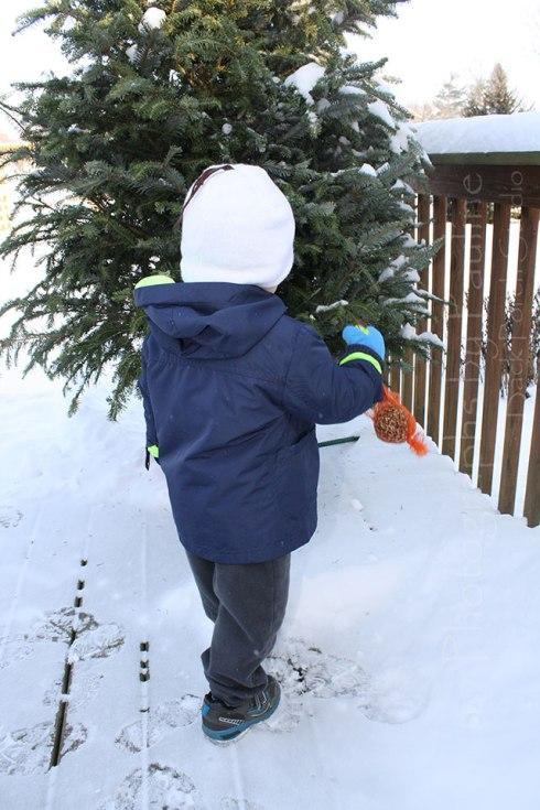 winter-2015-blog