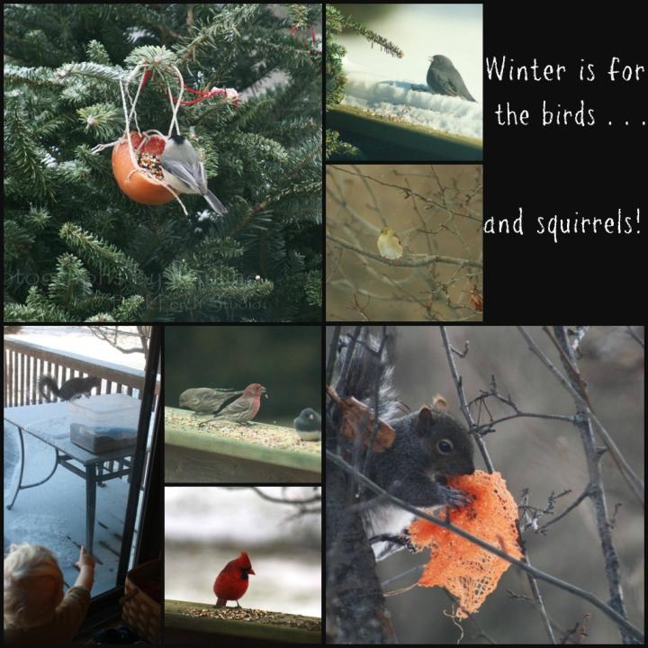 winter for birds