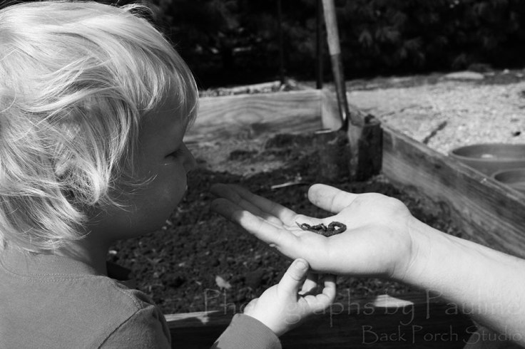 Discovering worms.