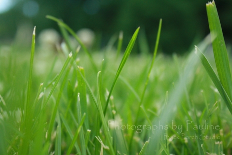 Grass is grown really fast these days!