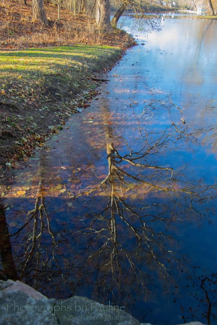 Web Ready Water Reflection Portrait_6288